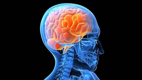 Estresores para el cerebro