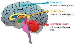 Neuroeconomia1