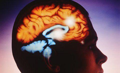 Dopamina y Economía
